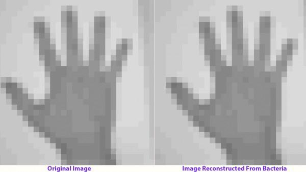 hand-image_0